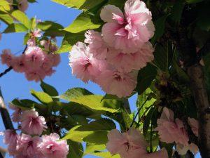 第三十七回 平成三十年度花祭り挙行  / 「花祭り」という呼び名の起こり