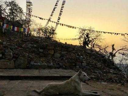 第四十五回 インド仏教聖地巡礼記録(5) かつての布教の拠点へ