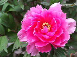 第十四回 花祭り挙行 / 春の花々