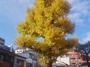 第二十九回 紅葉と冬枯れ