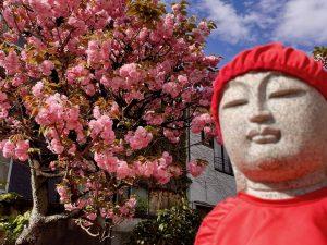 第九十回 令和三年 花祭り挙行のご報告